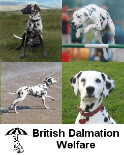 British Dalmatian Welfare