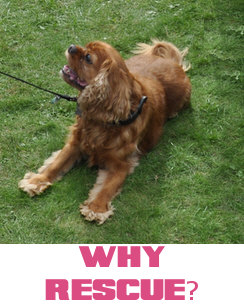 Why Rescue?